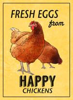 fresheggsfromhappychickens